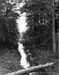 Picture of Berks - Wokingham, The Pines c1910s - N1201