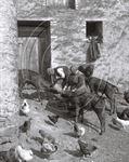 Picture of Devon - A busy Farmyard c1930s - N084